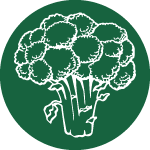 Broccoli-Icon